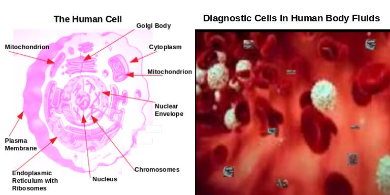 Diagnostic Cells In Human Body Fluids The PjProblemStrings