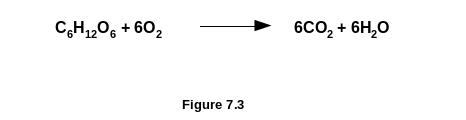 Oxidation Of Glucose