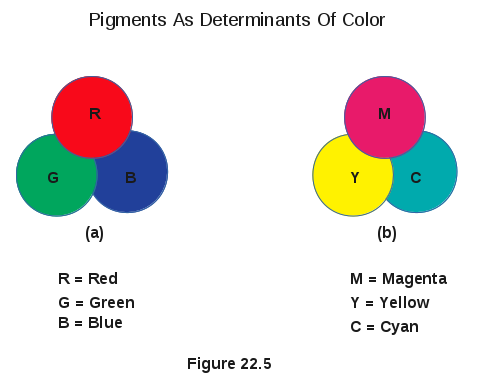 Pigments Of An Object Determine Its Color