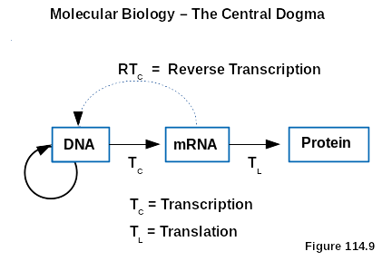 The Unidirectional Flow Of Genetic Information